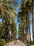 Palm trees, Palma